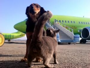 Подготовка животного к полету
