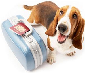 Особенности перевозки животных в различных авиакомпаниях