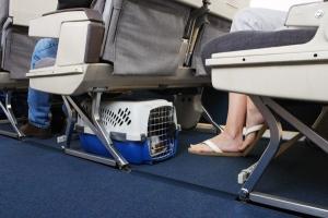 Где провозят животных в самолете?