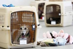 Требования к перевозке животных
