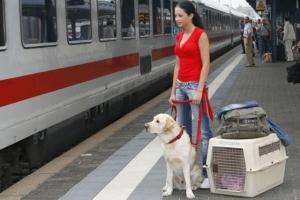 В каких вагонах можно перевозить крупных домашних животных (собак)?