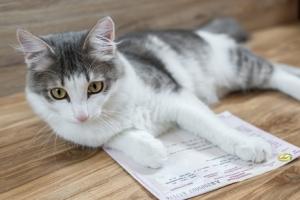 Какие документы нужны для перевозки животных в поезде?