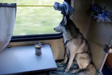 Правила провоза животных в поездах РЖД