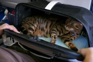 Перевозка животных в поезде ржд 2021 кошек