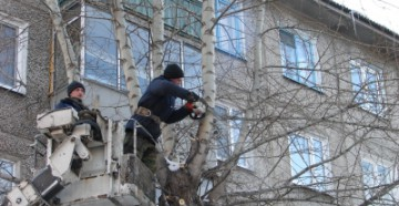 Куда обратиться, чтобы спилили дерево во дворе?