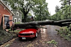 Дерево, упавшее на машину