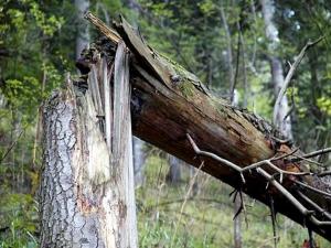 Как убрать аварийное дерево